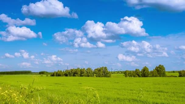Zelené louce za slunečného dne. timelapse