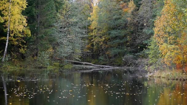padající listí v podzimním lese