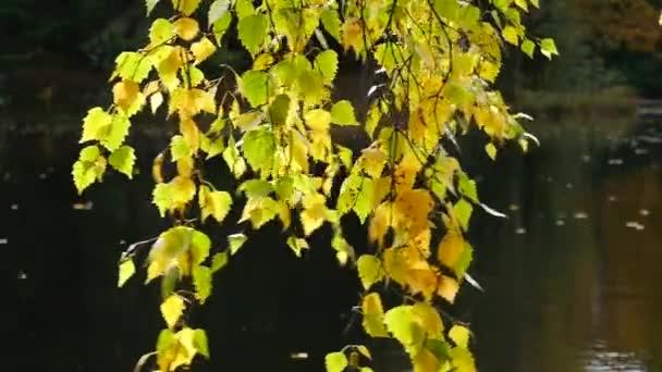 Egy fa ága, az őszi levelek