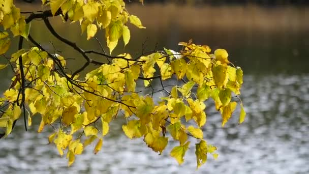 Listy na stromě na podzim