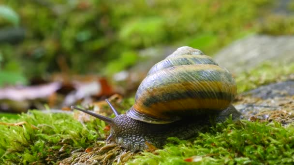Big Snail in the Tropical Forest