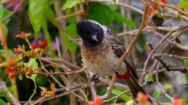 Malý ptáček sedí na větvi za slunečného dne
