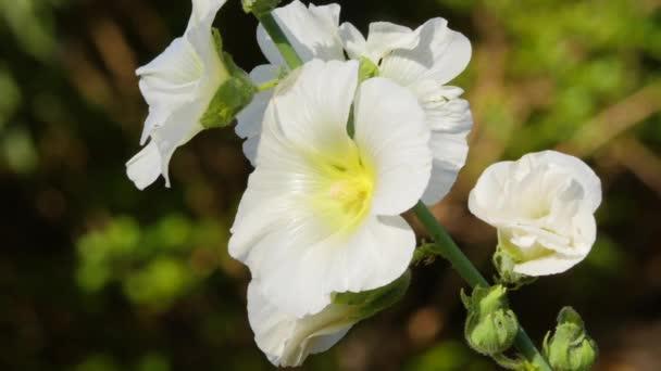 Indiai virág egy fényes napsütéses öltözékben