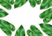 grüne Blätter Rahmen isoliert auf weißem Hintergrund.