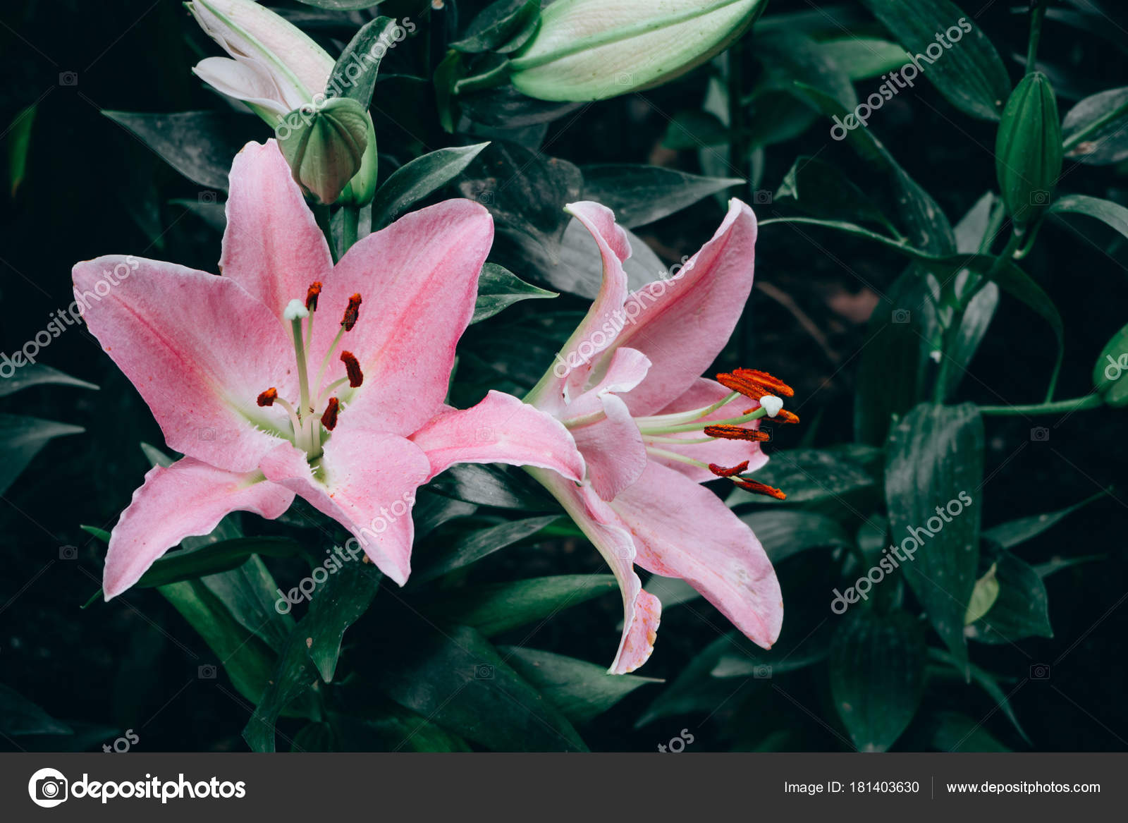 Lilies Flowers Bouquet In The Garden Spring Flowers Stock Photo