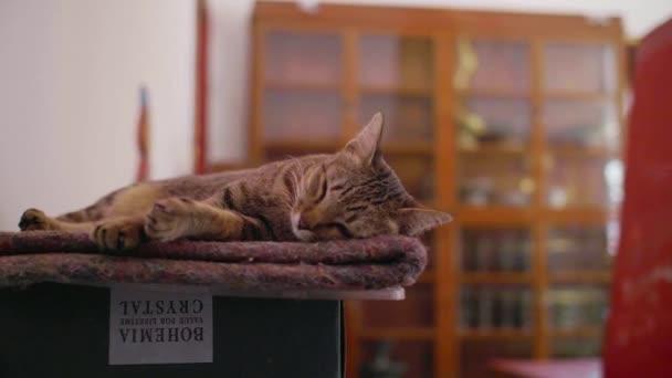 Handschuss in Zeitlupe, der eine Katze umkreist, die auf einer Kiste schläft
