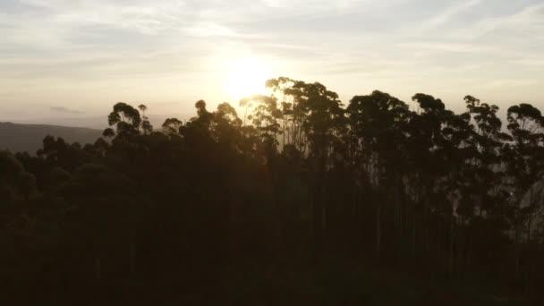 Západ slunce se třpytí mezi shlukem stromů v Jižní Africe