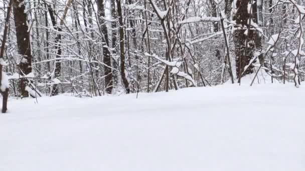 Sníh padající příroda lesní stromy krajina na bílém slunečném zimním náladovém dni. Světlý a jasný sníh studený čas video