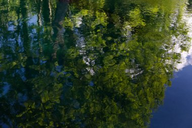 Italy, the splendid deep green waters of the Livenza river