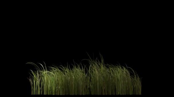 rostliny na větru (izolované na černé)