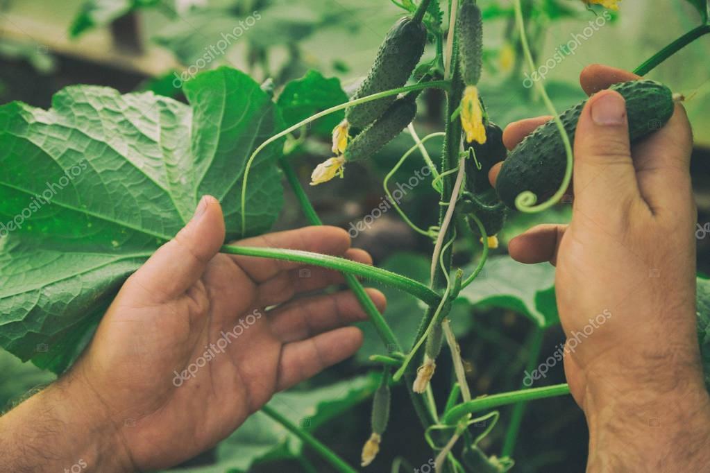 Care of the garden. Gardening
