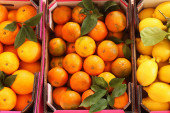 Various citrus fruits in box