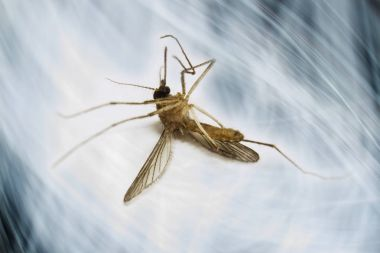 Avoid mosquito Itchy and irritating bites
