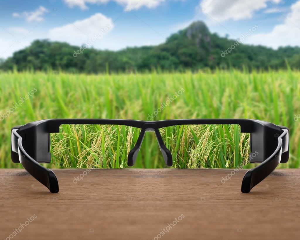 rice field focused in glasses lenses
