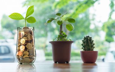 Gold coins and seed in bottle with plants