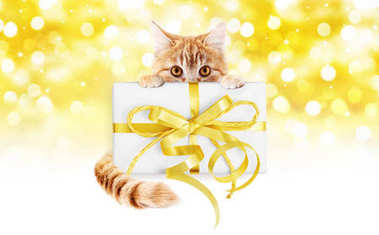 ginger cat and box gift present with golden ribbon bow Isolated