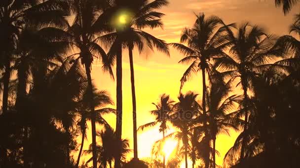 Nízký úhel pohledu: Vysoké kokosové palmy pohybující se ve větru na úžasné golden sunset