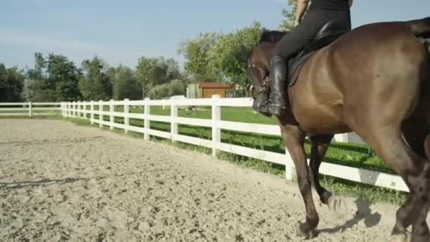 rider horseback riding a  horse