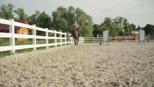 Slow Motion: Malý pes rychle podél žena jízda na koni