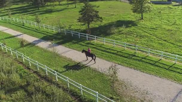 Anténa: Ženy jezdec chůzi s koněm a psem na krásný slunečný den