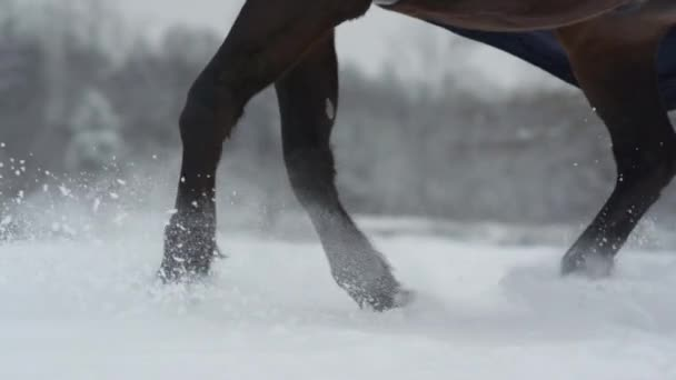 SLOW MOTION: Snowy horses legs rising snow while running in deep snow blanket