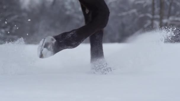 SLOW MOTION: Dark horse running though deep snow splashing snowflakes in winter