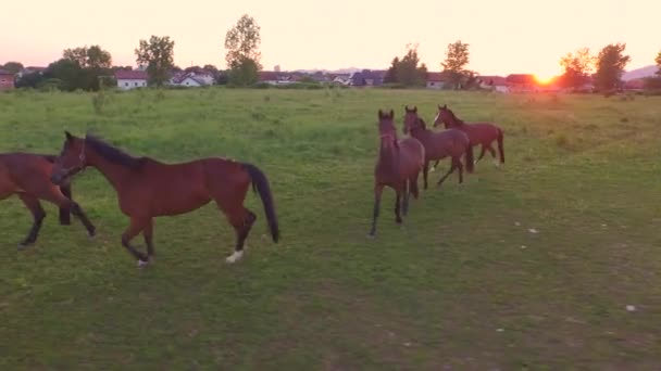 AERIAL CLOSE UP: Large group of young horses on big pasture field on horse ranch
