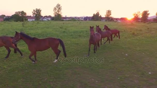 Letecká zblízka: Velká skupina mladých koní na velké pastvině pole na koňský ranč