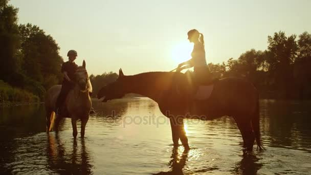 CLOSE UP: Two strong horses with riders standing in shallow river at sunrise