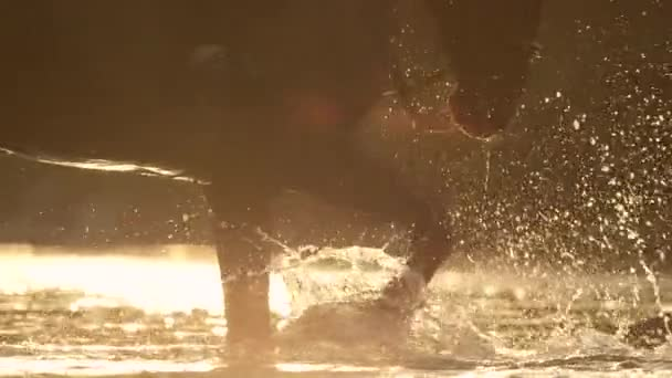 CLOSE UP: Happy dark brown horse playing with river water at golden sunset