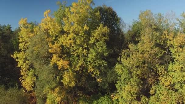 Antena Marquesinas De Grandes árboles Frondosos En Overgrown
