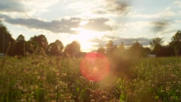 Close Up Dof: Kvetoucí trávy a jeteloviny pokryta ranní rosa na louku pole