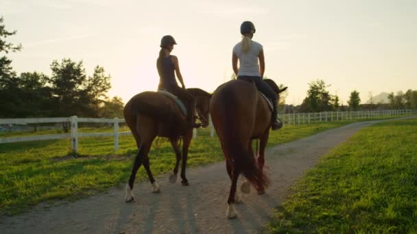 Slow Motion: Dva přátelé koni silné hnědé koně do západu slunce