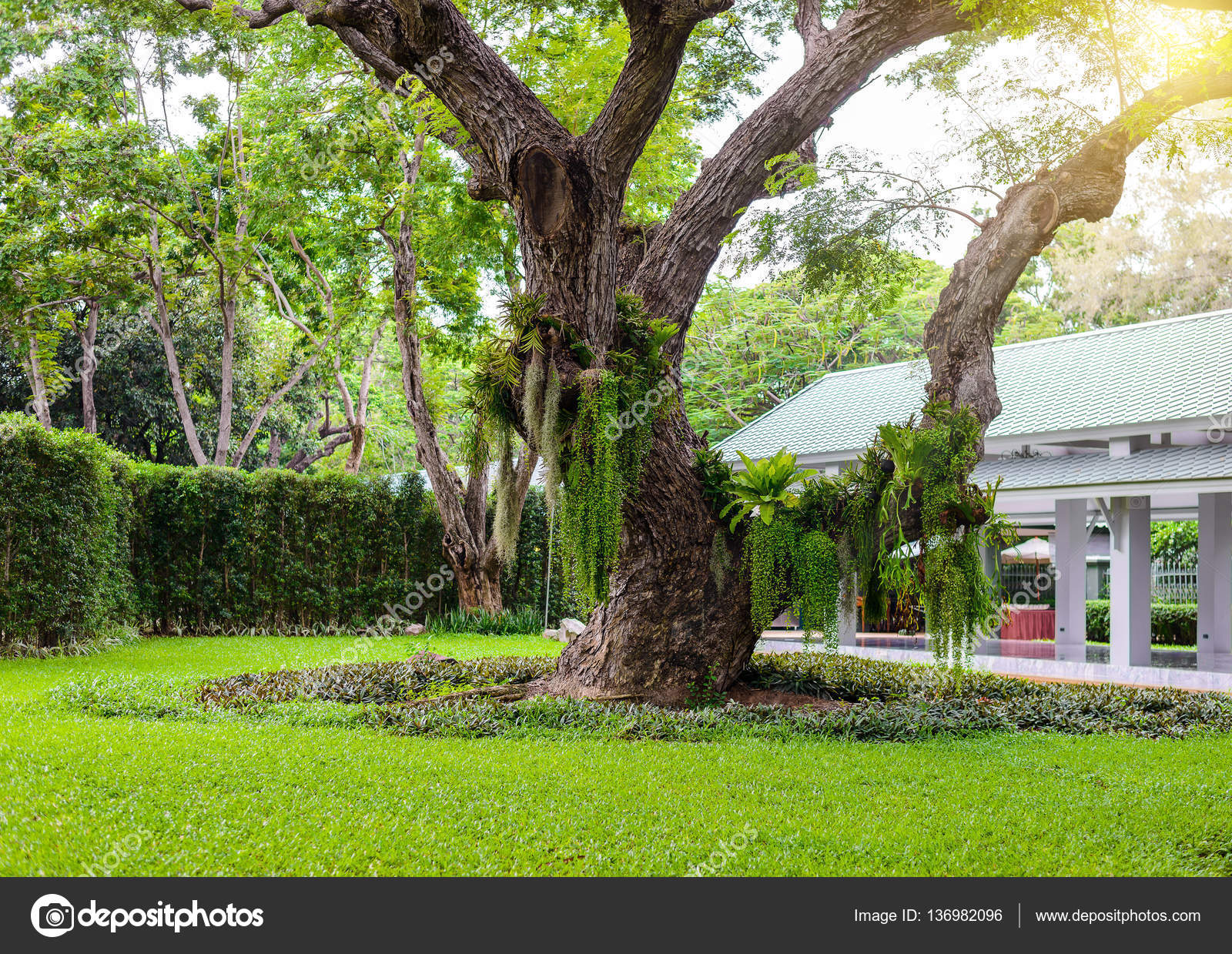 The decorative garden has large trees — Stock Photo © sirastockid08 ...