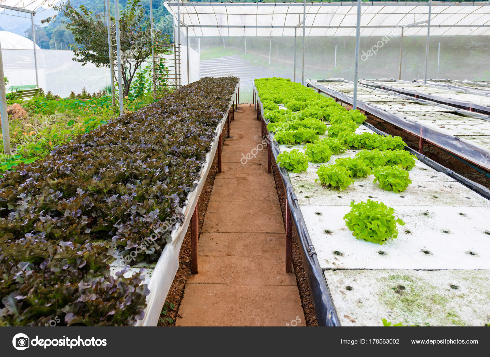 Hydroponic Growing Uses Mineral Nutrient Solutions Feed Plants Water ...