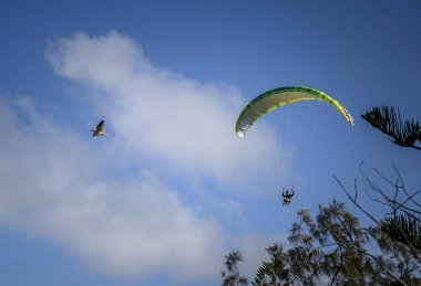 MOOLOOLABA, AUSTRALIA - Jan 01, 2020: A low angle view of paragliders competing in Mooloolaba under a blue sky in Australia