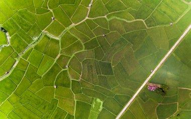 Rice farm Map, Bird Eye View