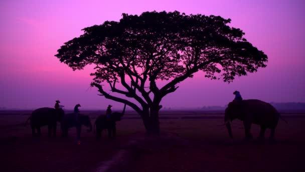 viele Menschen mit dem Elefanten in einem Reisfeld bei Sonnenaufgang in Thailand, 4k