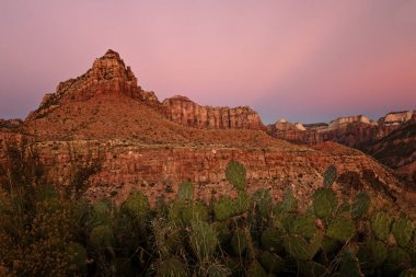 Kolob Terrace red rocks in sunset with opuntion