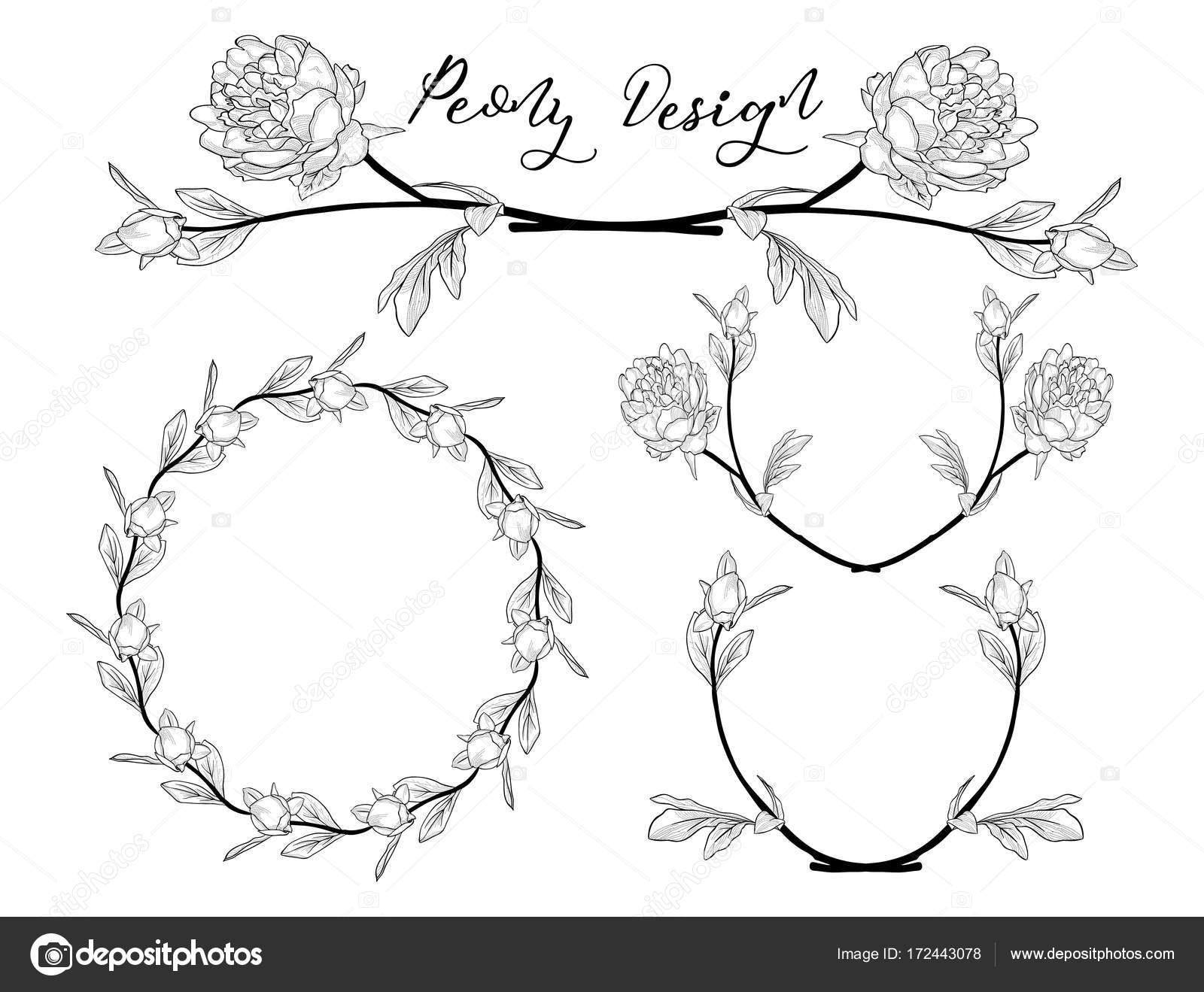 Vector diseño de la flor de peonía. Divisor, marco y guirnalda ...