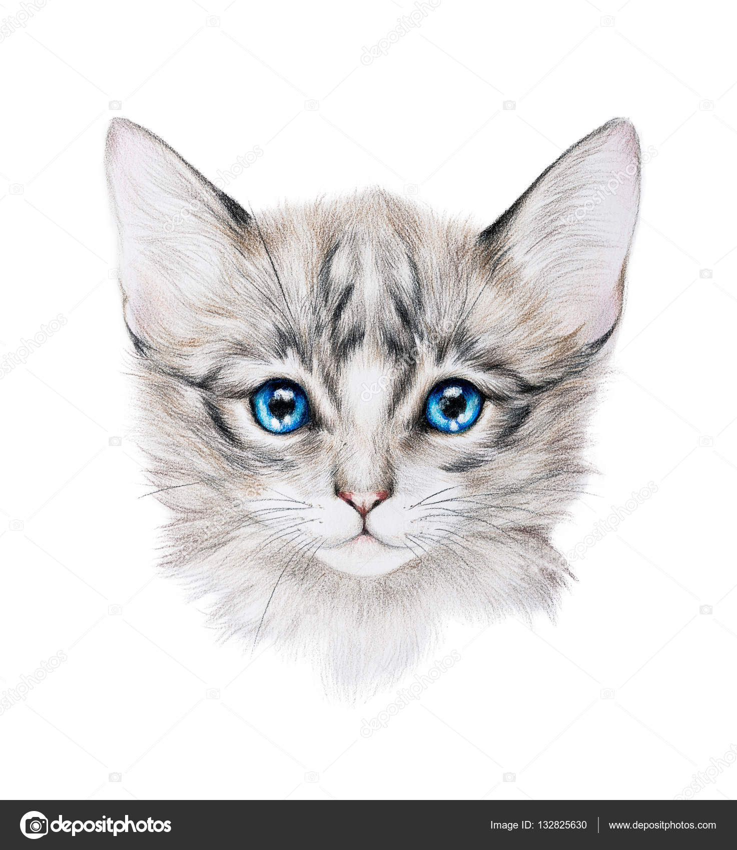 Pencil drawing of a grey kitten stock photo