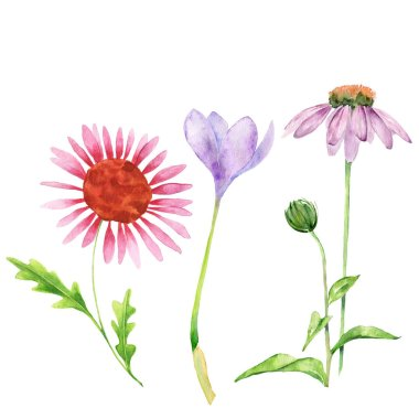 Collection of watercolor flowers