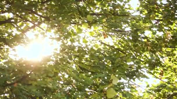 slunce si razí cestu mezi korunami stromů
