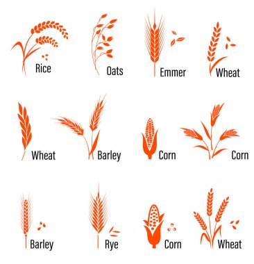 Cereals icon set with wheat.
