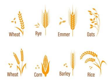 Cereals icon set.