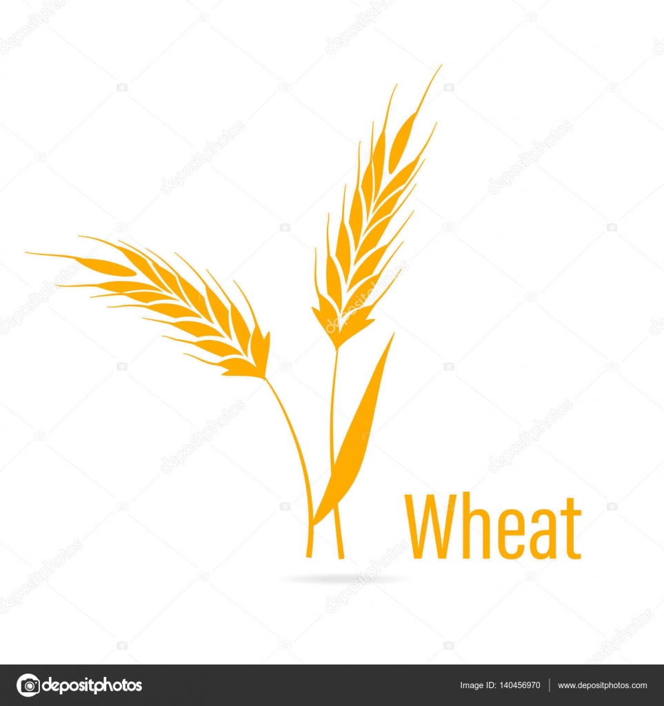 Gluten free icon ears of wheat stock vector nadia1992 140456970 agricultural symbols isolated on white background design elements for bread packaging or beer label vector by nadia1992 biocorpaavc Gallery