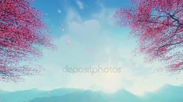 Cherry blossom plátky padající ze stromů pomalý pohyb 4k