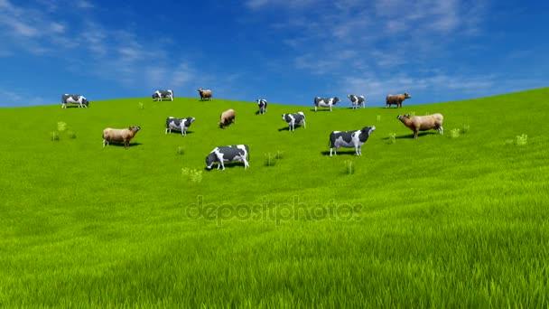 Dojil krávy se pasou na zelených pastvin
