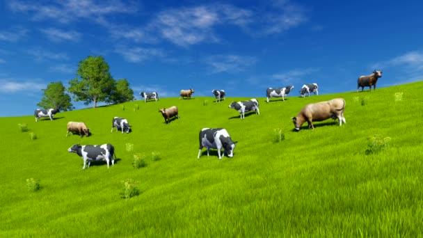 Krávy se pasou na zelené louce