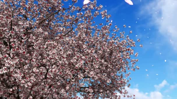 Japanese sakura cherry tree in full blossom and flower petals falling from treetop in slow motion against bright blue sky background. Spring season realistic 3D animation rendered in 4K